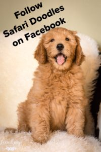 Click picture for Safari Doodle's Facebook page
