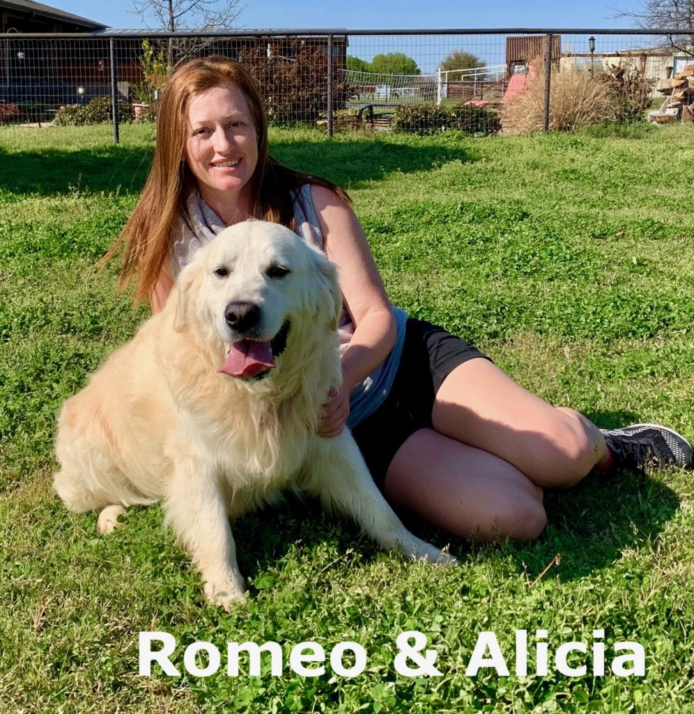 romeo, english cream golden retriever breeder in dallas texas
